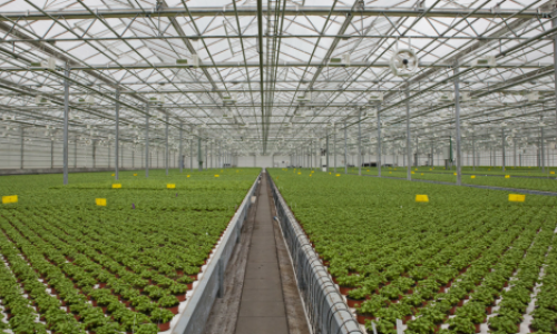 The Automated Greenhouse: What robots can contribute to herb production